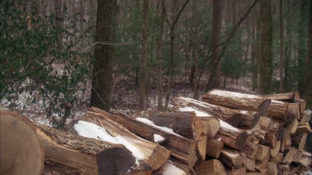 vídeos de stock, filmes e b-roll de medium angle of snow-covered wood or firewood pile. woods or forest. - firewood
