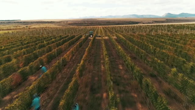 vineyard aerial view - geographical locations stock videos & royalty-free footage