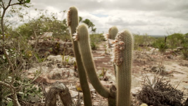 cactus - cactus stock-videos und b-roll-filmmaterial