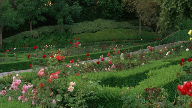 wide angle of rose garden, flowers and bushes, shrubs or hedges. on the grounds of the fleur de lys mansion. upper class. los angeles area. - fleur de lys stock videos & royalty-free footage