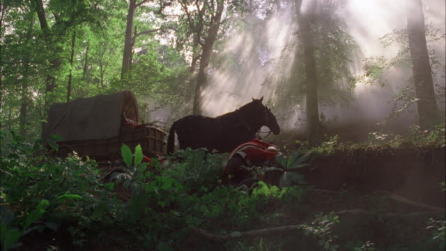 wide angle horse drawn covered wagon in forest, sunlight streaming down through smoke or mist. dead men, soldiers wearing red british revolutionary war era uniforms, lie face down on the ground. dead soldier slumped in driver's seat of wagon. two live hor - live streaming stock videos & royalty-free footage
