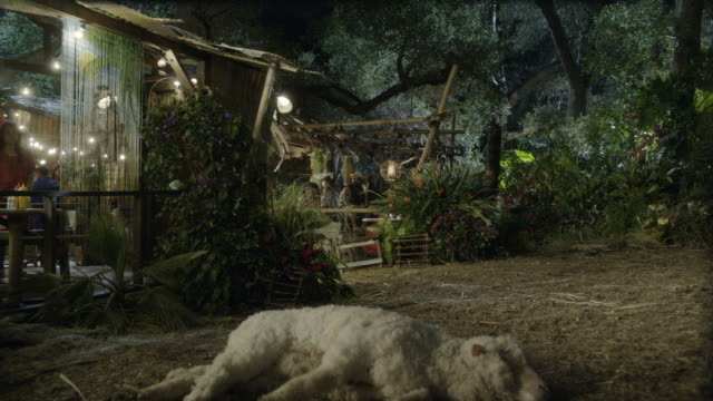 vidéos et rushes de pan up from dead sheep lying on ground to hut or shack with lights. could be rural market, bar, or restaurant. lights visible. jungle or woods. - cahute