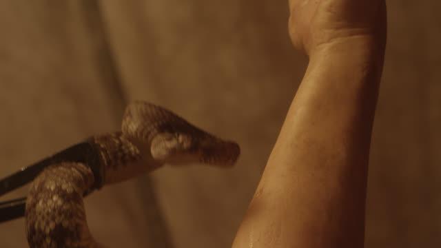 close angle of snake near person's arm. - 2013年点の映像素材/bロール