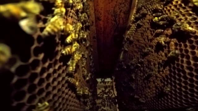 vidéos et rushes de bees - ruche