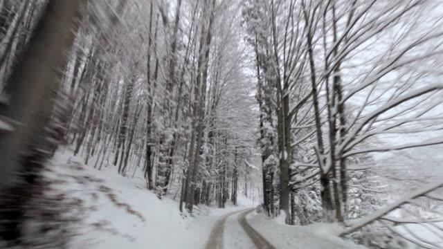 in the woods povs 2 - アッパーオーストリア点の映像素材/bロール