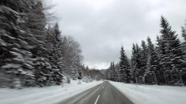 pov woods tl 2 - アッパーオーストリア点の映像素材/bロール