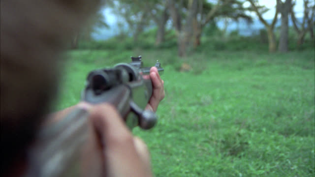 wide angle pov past hunter's rifle, shotgun or gun aimed at leopard or wild cat. hunting. - 動物を使うスポーツ点の映像素材/bロール