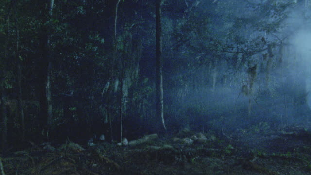 wide angle. est dark, forested area with trees and plants. fog enters from right. - nebbia video stock e b–roll