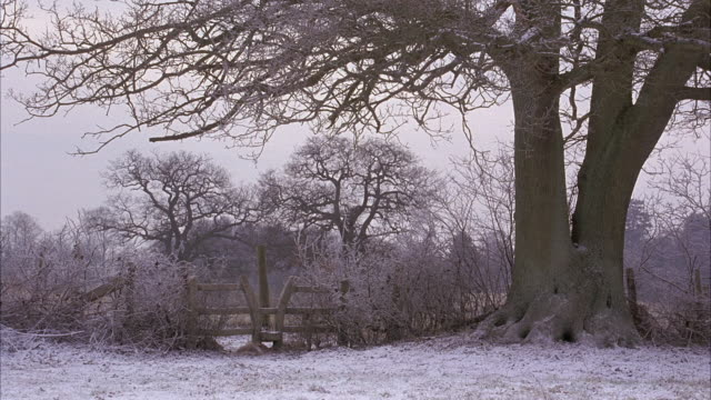 vidéos et rushes de wide angle of english countryside. ground covered in white snow.bare treeb racnhes and wooden fence. winter. rural area. - bare tree