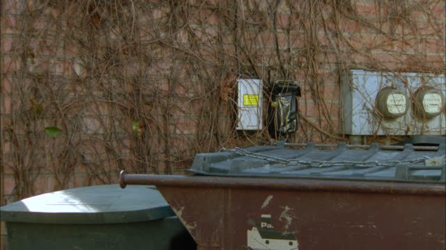 stockvideo's en b-roll-footage met pan left to right of orange tabby cat walking over trash or garbage cans and dumpster. - afvalcontainer container