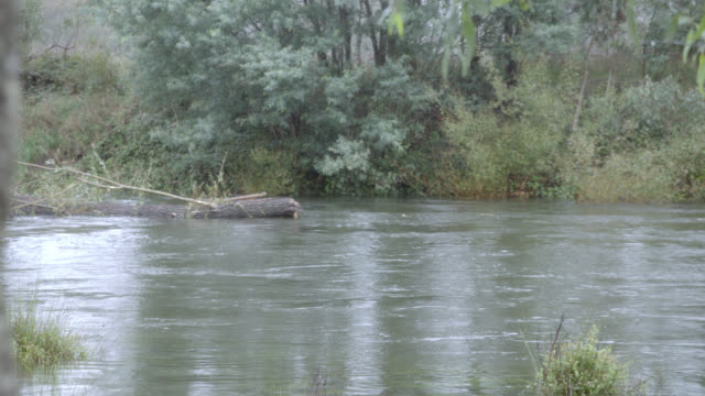 medium angle of log or tree branch floating down creek or river. - log stock videos & royalty-free footage