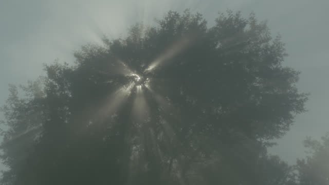 up angle of trees blowing in wind. smoke or fog hangs in air. could be fire or natural disaster. - nebbia video stock e b–roll