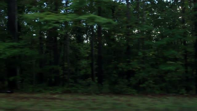 vídeos de stock, filmes e b-roll de process plate straight right driving past woods or forest. trees. - placa de processo