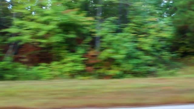 vídeos de stock, filmes e b-roll de process plate straight left driving past woods or trees in forest. - placa de processo