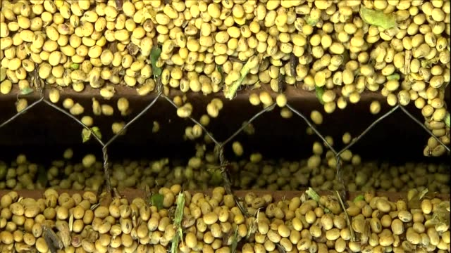 soybean - soya bean stock videos & royalty-free footage