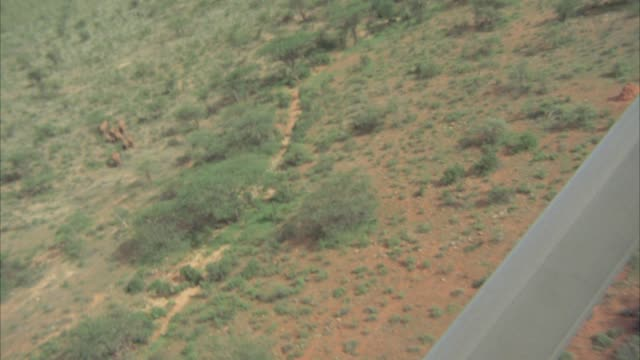 AERIAL VIEW OF BROWN AND GREEN AFRICAN PLAINS OR VELDT. SEE SEVERAL HERDS OF ELEPHANTS WALKING BELOW. SEE VARIOUS GREEN TREES AND BUSHES AND VEGETATION SCATTERED BELOW. SEE PART OF PLANE IN FRAME.