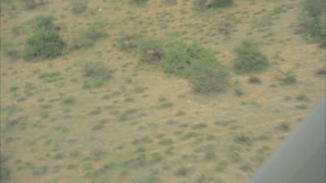 AERIAL VIEW OF BROWN AND GREEN AFRICAN PLAINS OR VELDT. SEE HERD OF ELEPHANTS WALKING BELOW. SEE VARIOUS GREEN TREES AND BUSHES AND VEGETATION SCATTERED BELOW. SEE PART OF PLANE IN FRAME.