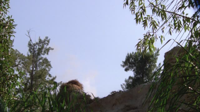 vidéos et rushes de up angle of grey smoke rising into sky. trees, plants and large rock or boulder in fg. - boulder rock