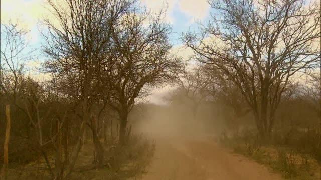 atlantic forest - serra do mar - mar stock videos & royalty-free footage