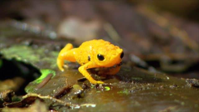vídeos de stock, filmes e b-roll de atlantic forest - serra do mar - fauna silvestre