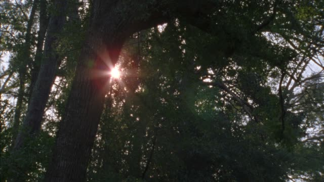 up angle of sunlight shining through tree leaves and branches. camera pans down left to right to jeep wagoneer driving down country road or rural area from bg to fg. leaves on road. wooden fence. matches 2002-33 country road. - 2002 stock videos & royalty-free footage