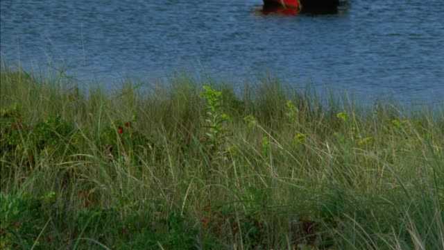 pan up from grass of shoreline to boats moored and anchored in harbor. two story upper class new england houses on hilltops of shore in bg. martha's vineyard. could be lake. - zweistöckiges wohnhaus stock-videos und b-roll-filmmaterial
