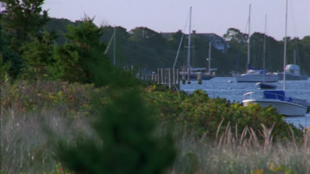 pan left to right from trees and bushes to boats anchored and moored in harbor or lake. buoys. houses on hillsides line shoreline. new england. martha's vineyard. - anchored stock-videos und b-roll-filmmaterial