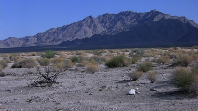established wide angle of desert horizon with shrubs. skull of animal or bull or cow in center, mountains in background. - animal skull stock videos and b-roll footage