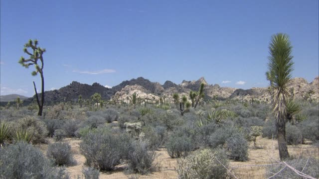 wide angle pan left of desert with cacti and shrubs, mountains in background. - succulent stock videos & royalty-free footage