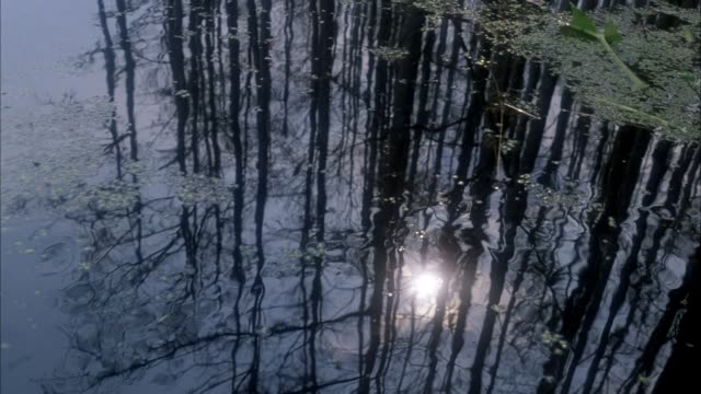 vídeos y material grabado en eventos de stock de medium high angle down of water surface in swamp or marsh. moss and tree branches on water surface with reflection of trees and sunlight. pans up to trees and sky, sun rays reflect from left. trees are bare. - bare tree