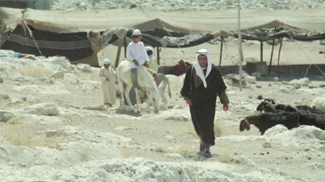 medium angle of several bedouin goat herders and goats in desert walking and riding on mules toward camera, begin looking at sky and pointing up, canopy or tent is visible in background. middle east. middle east. - nomadic people stock videos & royalty-free footage