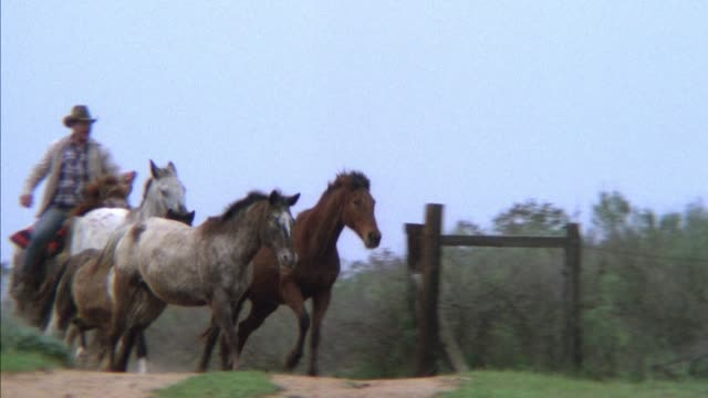 medium angle of two men, possibly cowboys, in brush on horseback. they drive horses out in front of them forward, then white and brown horses trot to right. tracks horses and zooms in to see heads and feet. - 1945 stock videos & royalty-free footage