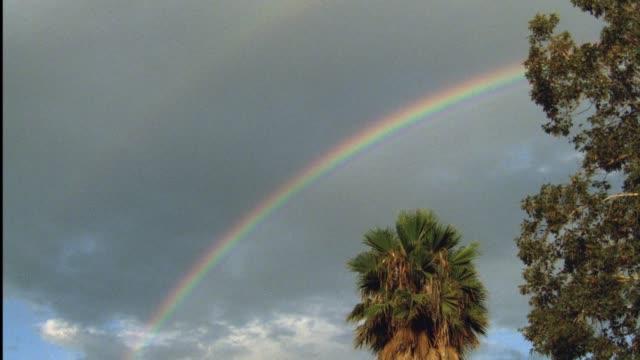 up angle of rainbow in sky over large palm tree. - 虹点の映像素材/bロール