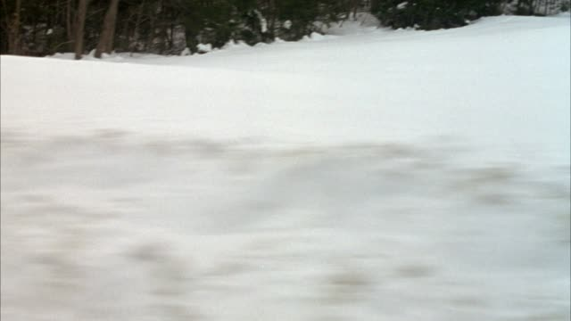 process plate straight left driving on snowy mountain road. see snow covering ground with evergreen trees on side of road. see snow bank on side of road. pass several houses or cabins. preview file has been trimmed from master clip 6206-021. for additiona - vermont stock-videos und b-roll-filmmaterial