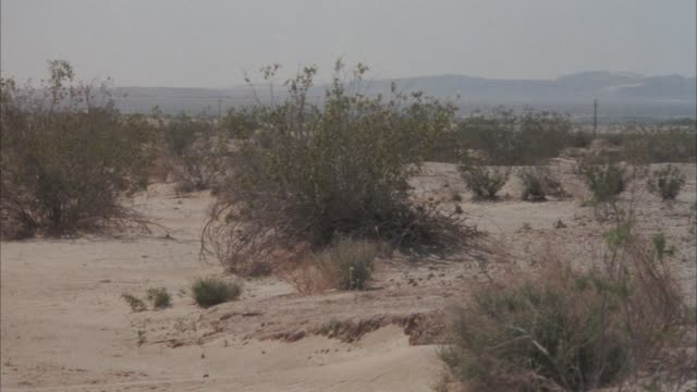 wide angle of desert brush blowing in wind. shot pans left to right, empty desert. building construction in distance. - 1940 stock videos & royalty-free footage