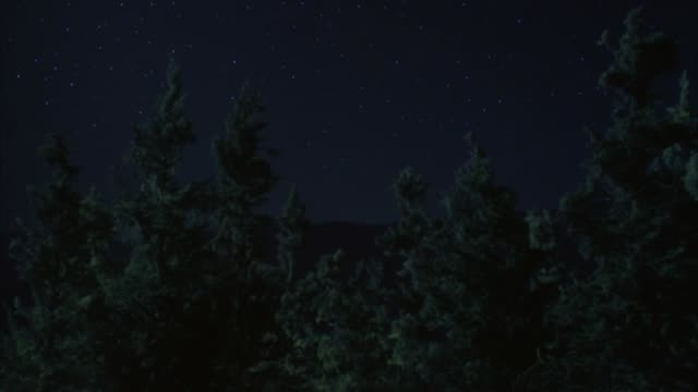 wide angle of trees. high pov with treetops visible. could be forest or woods. burning meteor enters frame from top and flies to ground below frame. flash of light from off screen as meteor hits ground. could be comet. fires. - 彗星点の映像素材/bロール