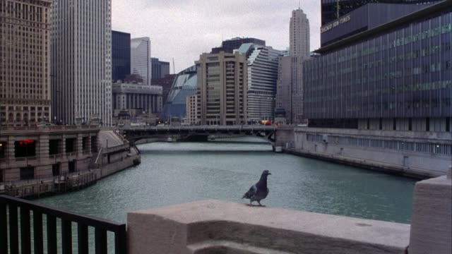 vídeos y material grabado en eventos de stock de medium angle chicago river and chicago skyline. see bridge  in distance over river. traffic along  river at left and over bridge. flock of pigeons fly over river. - medium group of animals