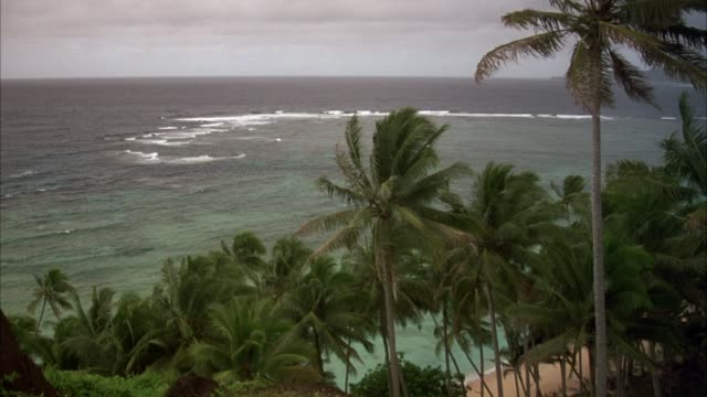 wide angle of beach and palm trees. pov could be from balcony overlooking ocean. see waves come in. camera pans right and down to see grassy hillside. - tahiti video stock e b–roll