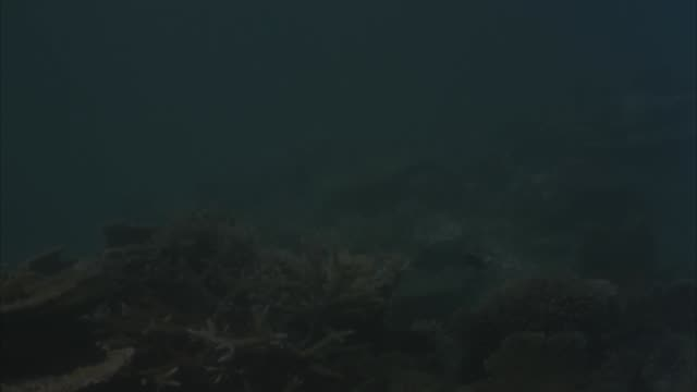 medium angle of ocean, see coral under water. see fish floating in frame. see spear quickly pierce into water. misses fish as it floats in water. - pier stock videos & royalty-free footage
