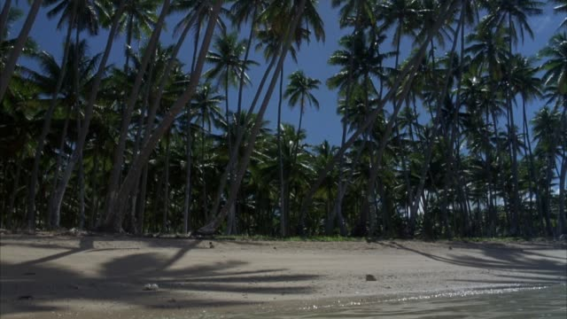 wide angle of tropical island beach. pov from ocean to beach. see water lapping at sandy shore. see dense palm tree grove. - tropical tree stock videos and b-roll footage