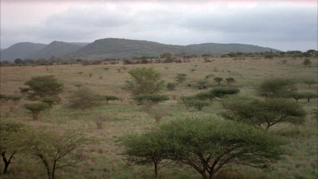 wide angle of african savannah or plains with green hills in background.  four or five nd animals move around in middle of frame. - four animals stock videos & royalty-free footage
