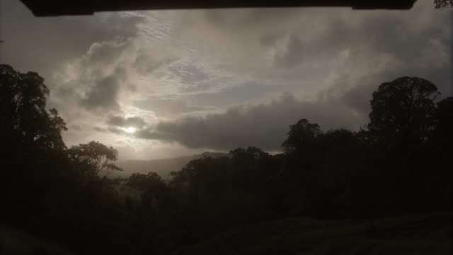 WIDE ANGLE OF TREES, WOODS, FOREST, JUNGLE, OR RAINFOREST. VERY UNDEREXPOSED. MIST, FOG, OR CLOUDS VISIBLE IN BG.