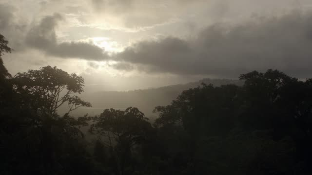 MEDIUM ANGLE OF TREES, WOODS, FOREST, JUNGLE, OR RAINFOREST. SLIGHTLY UNDEREXPOSED. MIST, FOG, OR CLOUDS VISIBLE IN BG.