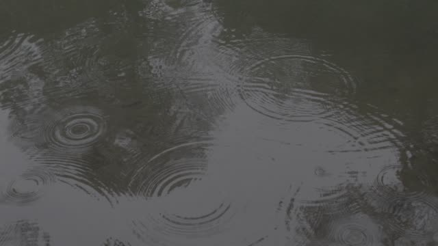 medium angle of rain falling on lake, river, stream, or creek. could be storm. reflection of trees visible. could be woods, jungle, rainforest, or forest. - woodland stock videos & royalty-free footage