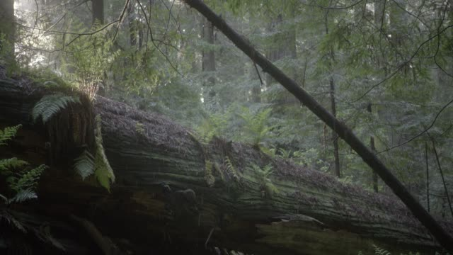 medium angle of fallen tree in woods or forest. ferns and plants visible. water falling visible. could be rain. - fern stock videos & royalty-free footage