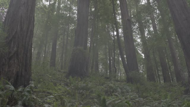 medium angle of person in jumpsuit running and rolling down hill towards camera in woods or forest. trees, fern, and plants visible. stunts. - jumpsuit stock videos and b-roll footage
