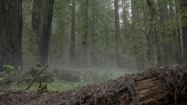 medium angle of person in jumpsuit running through woods or forest towards camera. camera pans right to left to follow. stunts. ferns, plants, and fallen trees visible. - jumpsuit stock videos and b-roll footage