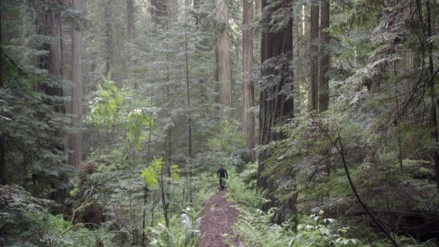 medium angle of person in jumpsuit running through woods or forest towards camera. stunts. ferns, plants, and fallen trees visible. - jumpsuit stock videos and b-roll footage