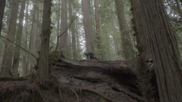 up angle of person in jumpsuit running through woods or forest and jumping over fallen trees. person tucks nad rolls. stunts. ferns and plants visible. - jumpsuit stock videos and b-roll footage