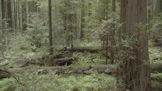wide angle of person in jumpsuit running through woods or forest towards camera. person jumps over fallen trees.  stunts. ferns and plants visible. - jumpsuit stock videos and b-roll footage